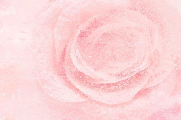 Rosa blühender rosenblumenhintergrund