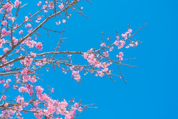 Rosa blüten auf der niederlassung mit blauem himmel während des frühlingsblühens