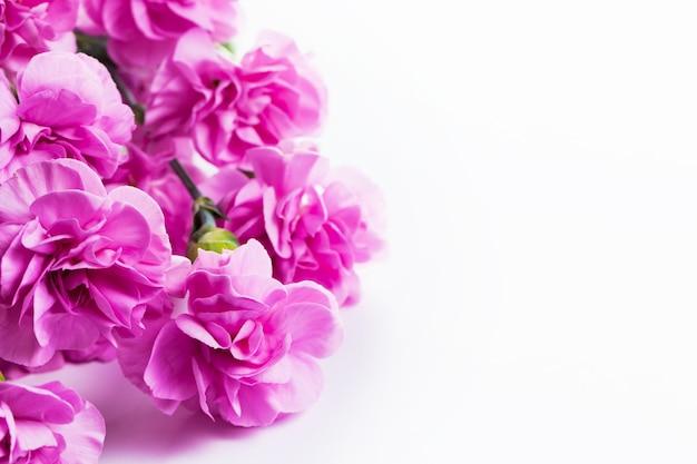 Rosa blüten mit weißem hintergrund