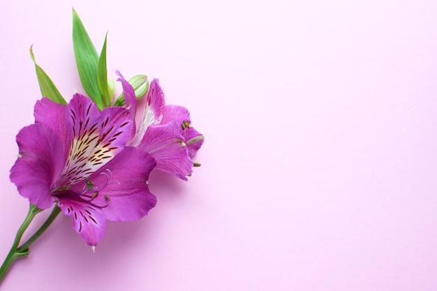Rosa blüten und grüne blätter auf zarter rosa oberfläche