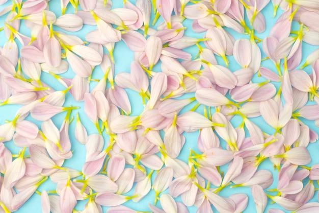 Rosa blütenblätter auf einem farbigen hintergrund. blumenfrühlingshintergrund