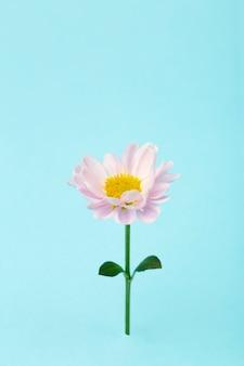 Rosa blume auf einem farbigen minimalen hintergrund. blumenhintergrund kreativ. speicherplatz kopieren