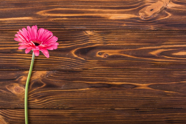 Rosa blume gerbera auf tabelle