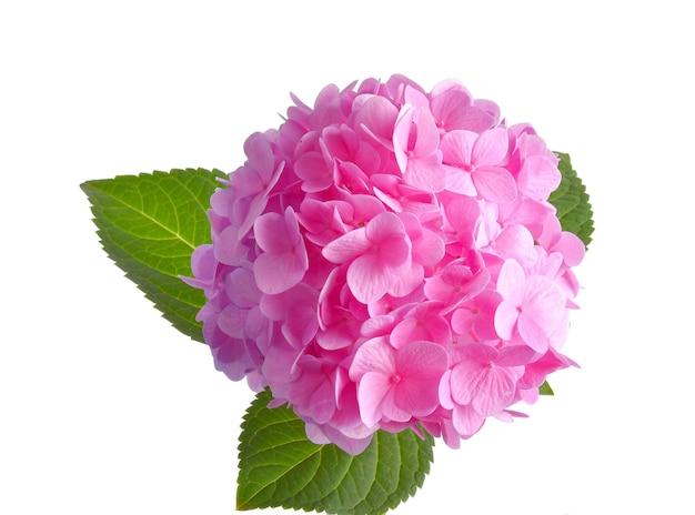 Rosa blume mit blättern auf einer weißen oberfläche