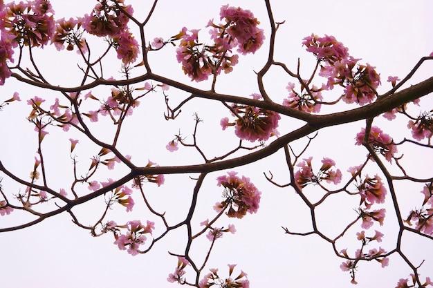 Rosa blume mit zweig lokalisiertem weißem hintergrund