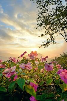 Rosa blume und sonnenlicht