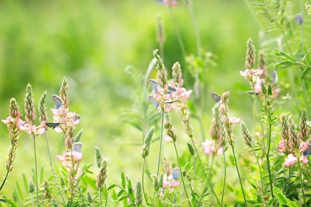 Rosa blumen auf grünem hintergrund mit blauen schmetterlingen, natürlicher schöner hintergrund