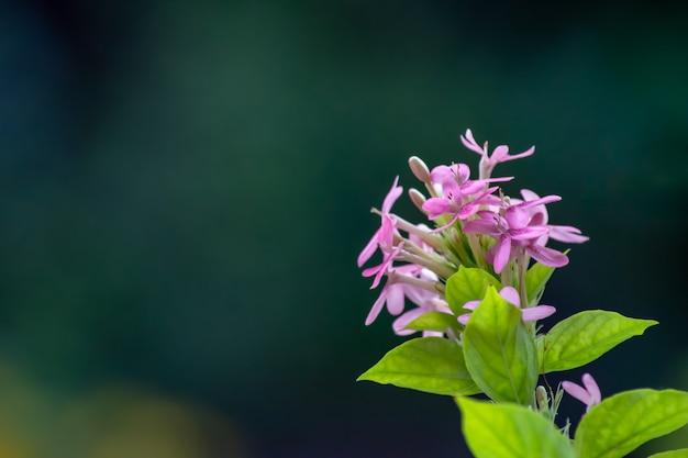 Rosa blumen auf grünen blättern im hintergrund.