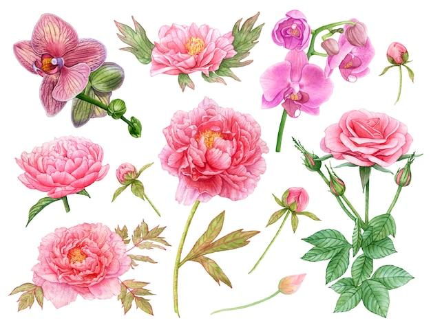 Rosa blumen des aquarells auf weißem hintergrund. pfingstrosen, orchideen, rose.