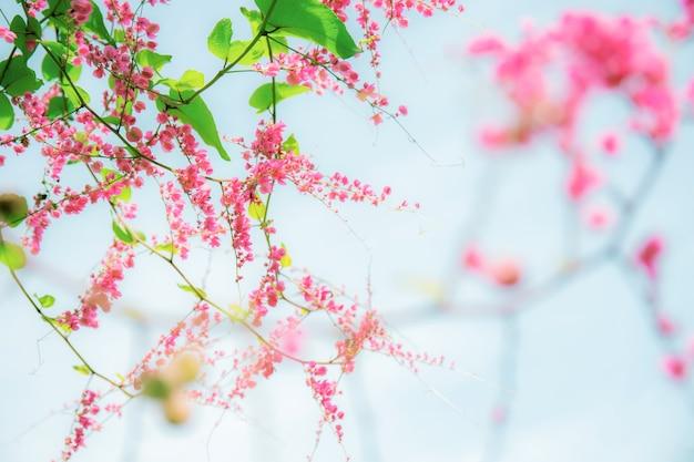 Rosa blumen, die auf blauem klarem himmel blühen