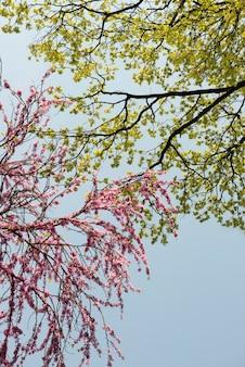 Rosa blumen, die während des frühlings blühen