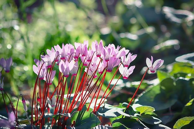 Rosa blumen in frühlingsparks gefüllt mit duft