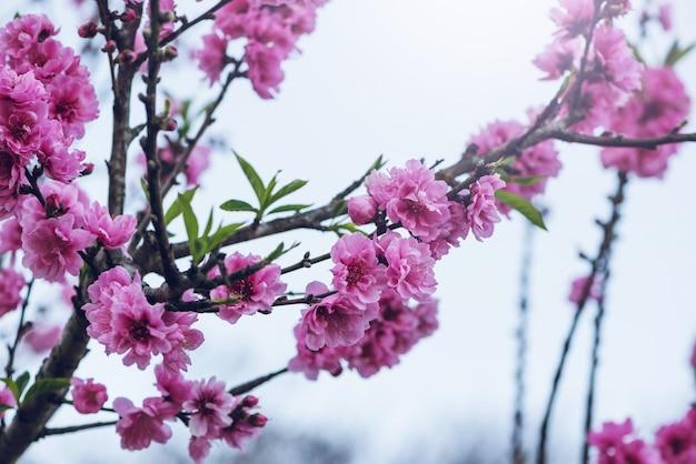 Rosa blumen-valentinsgruß.