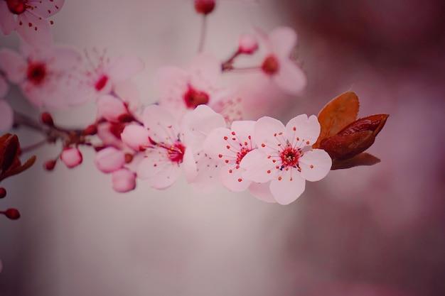 Rosa blumenpflanze im garten