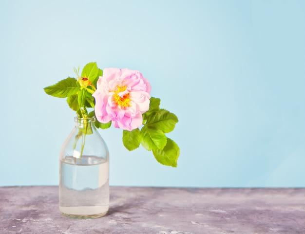 Rosa briar wilde rosen in einer vase