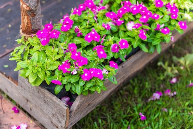 Rosa brunnenkresseblumen