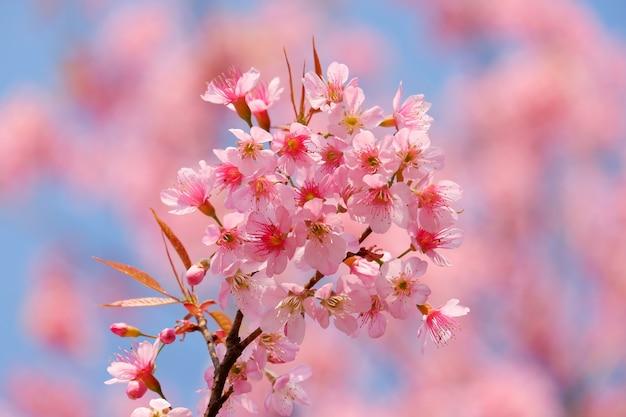 Rosa fröhliche blütenblume, die im baumhintergrund blüht