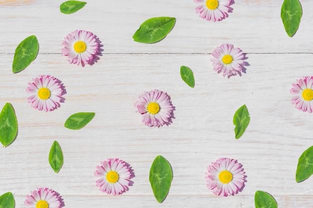 Rosa gänseblümchen blüht auf holztischhintergrund mit kopienraum