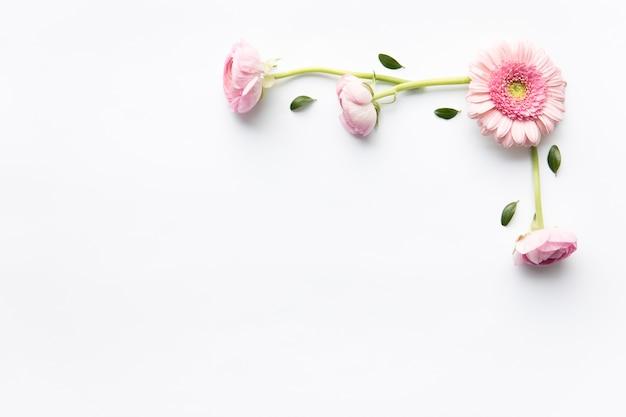 Rosa gänseblümchen- und pfingstrosenzusammensetzung