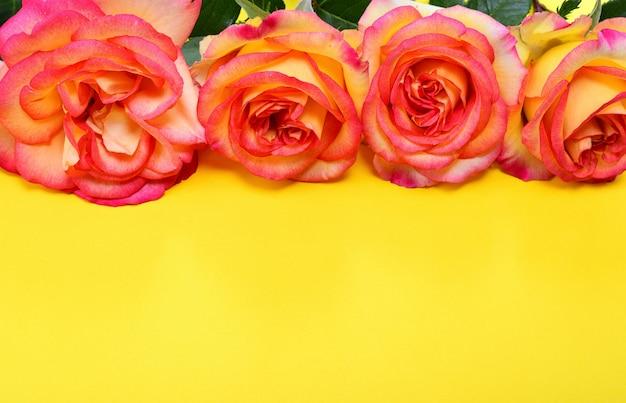 Rosa-gelbe rosen auf gelbem grund