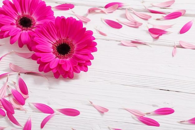 Rosa gerber auf weißem hölzernem hintergrund