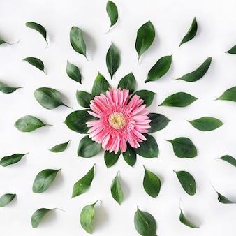 Rosa gerbera-gänseblümchenmuster auf weiß