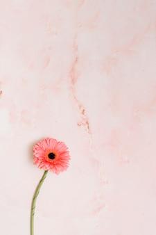 Rosa gerberablume auf tabelle