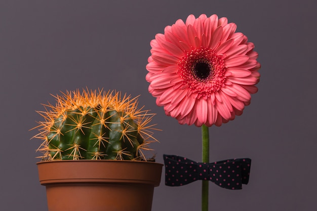 Rosa gerberablume mit einer fliege am stiel neben einem kaktus in einem braunen topf