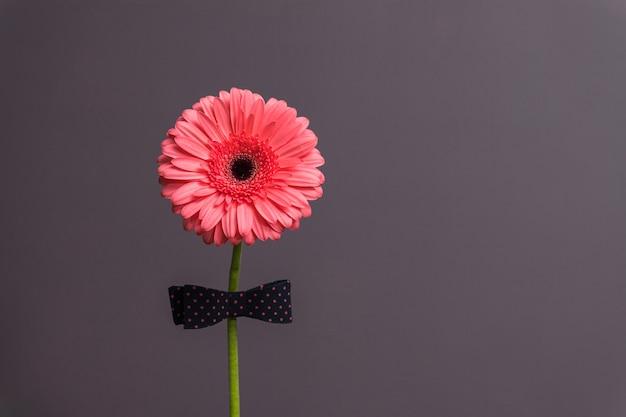 Rosa gerberablume mit einer fliege am stiel