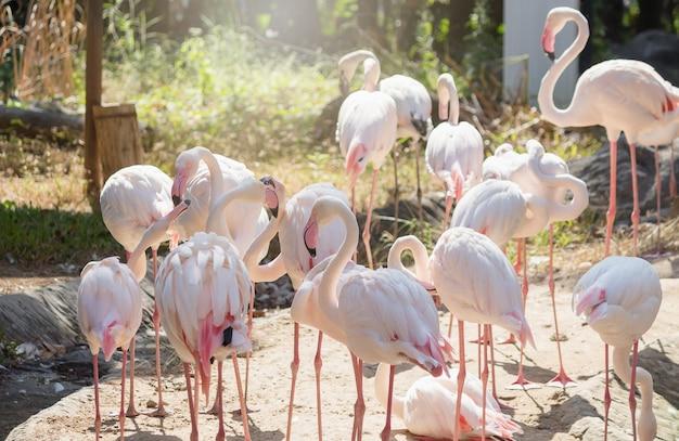 Rosa große vögel größere flamingos im zoo.
