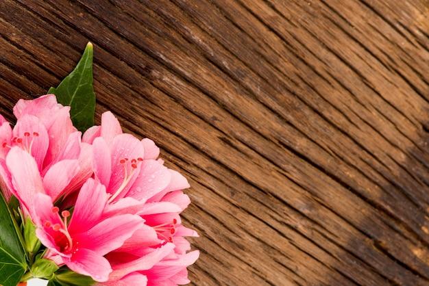 Rosa hibiskusblumen auf einem alten hölzernen hintergrund.