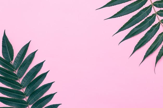 Rosa hintergrund mit palmenzweigen, grünen blättern.
