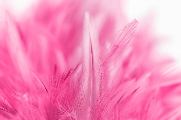 Rosa hühnerfedern in der weichen und unschärfeart für hintergrund