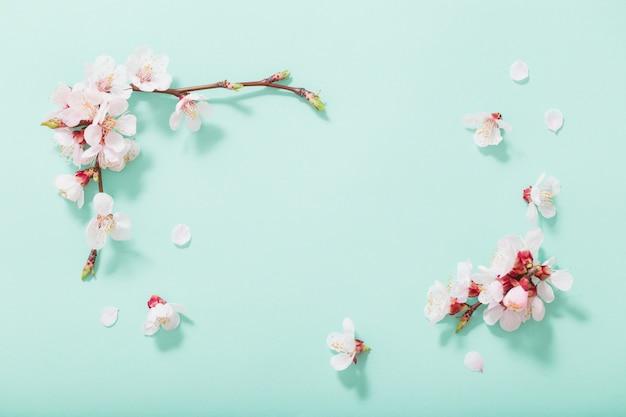 Rosa kirschblumen auf grünem hintergrund