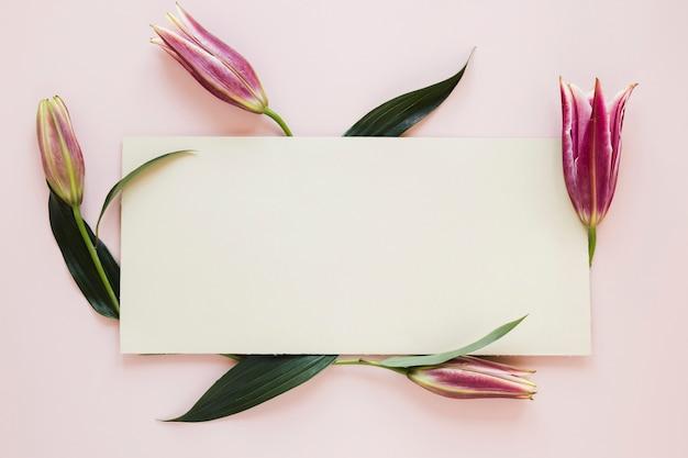 Rosa königliche lilien der steigung, die ein blatt papier umgeben