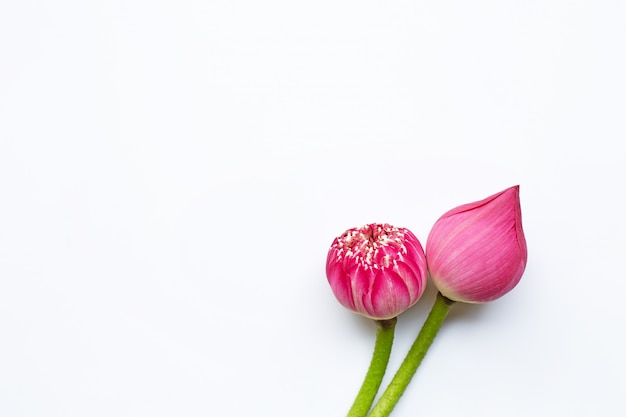 Rosa lotosblumen auf weiß