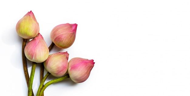 Rosa lotusblume auf weiß lokalisiert. draufsicht mit kopierraum