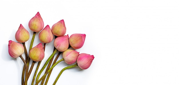 Rosa lotusblume auf weißem hintergrund.