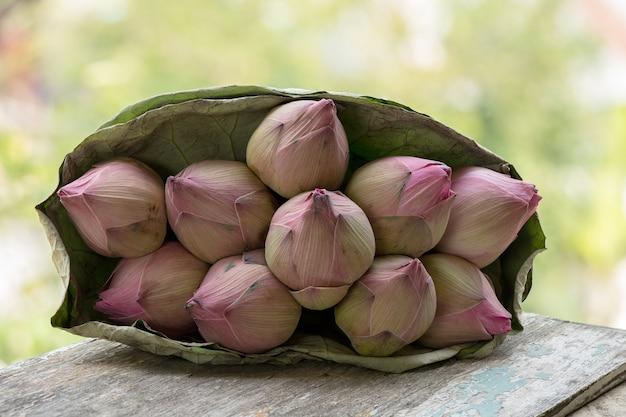 Rosa lotusblumen auf naturhintergrund.