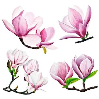 Rosa magnolienzeichnung. handgezeichnete magnolien in gouache. frühlingsblumen auf einem ast.