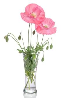 Rosa mohnblumen in glasvase isoliert