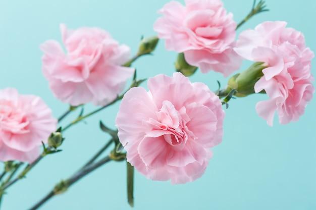 Rosa nelken auf mintgrünem hintergrund