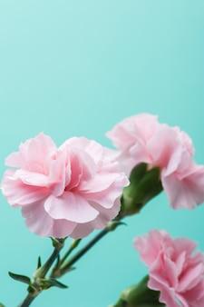 Rosa nelken auf mintgrüner wand