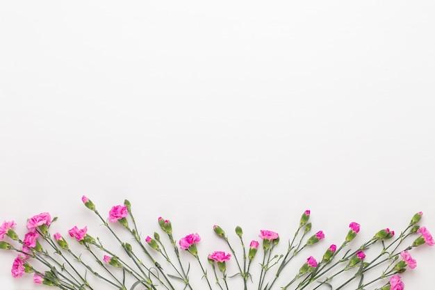 Rosa nelkenblumen auf weißem hintergrund. valentinstag-grußkarte. flache lage, ansicht von oben, kopienraum.