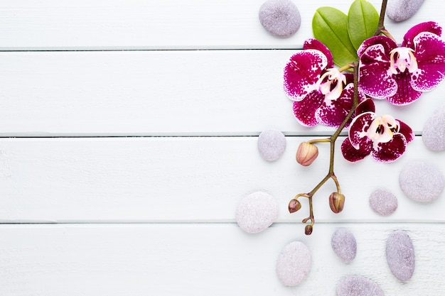 Rosa orchidee auf holz. spa- und wellnes-szene.