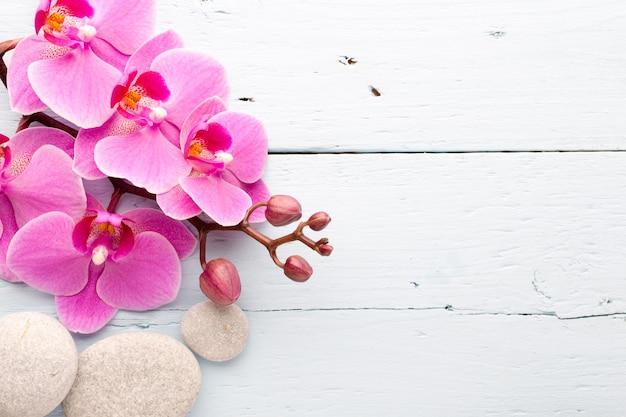 Rosa orchidee mit knospenhintergrund