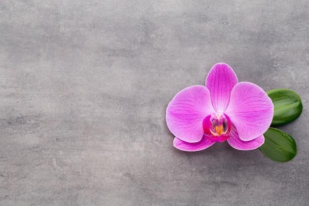Rosa orchideen auf dem grauen hintergrund