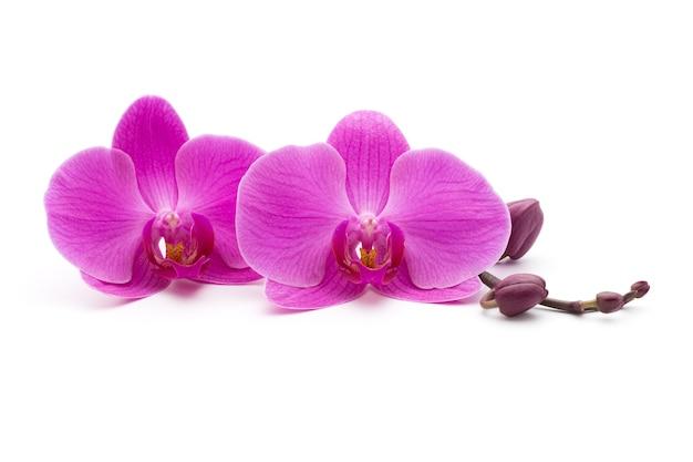 Rosa orchideen auf dem weißen hintergrund.