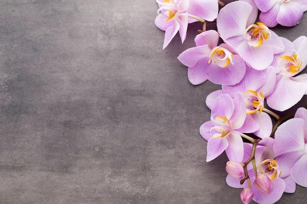 Rosa orchideenblume auf einem grauen strukturierten hintergrund, raum für einen text.