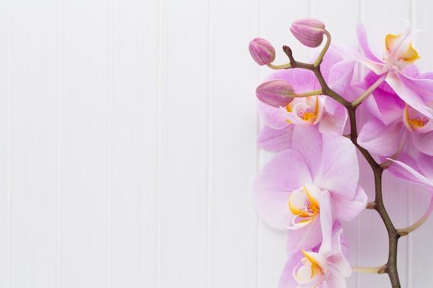Rosa orchideenblume auf einem weißen hölzernen strukturierten hintergrund, raum für einen text.